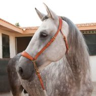 Marjoman Presentation Halter with long lead